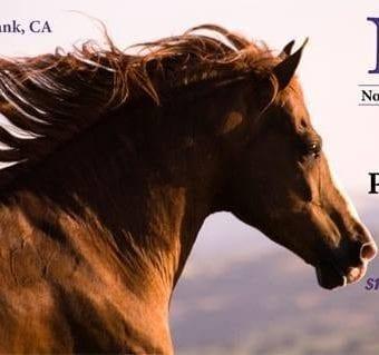 2013 NAPHA US National Peruvian Horse Show Burbank, CA