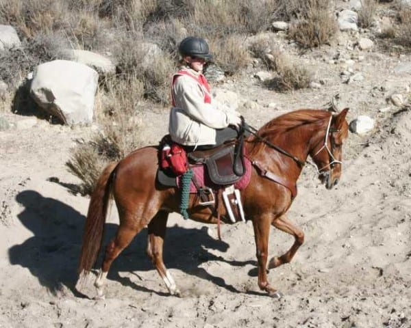 Joy of Riding Participant Cheryl Calentine Receives 2008 International Side saddle Organization (ISSO) Award