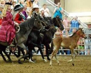 Peruvian Horses at the Boulder Horse Ballet