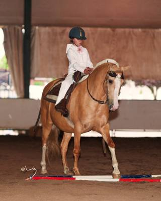 "Seven year old Erica Glenn riding Peruvian Gelding ""CC"" at the Evergreen Classic All Gaited Horse Show"