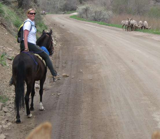 Lisa Bialy and her Peruvian mare, Vista Del Dragon out on the trail.