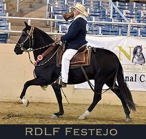 RDLF Festejo Medallon de Oro, Medallon de Bronce, Outstanding Performance Horse, Outstanding Performance Gelding