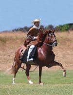 Ringstead Ranch